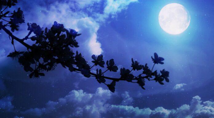 Frases de buenas noches ¡que tengas dulces sueños!