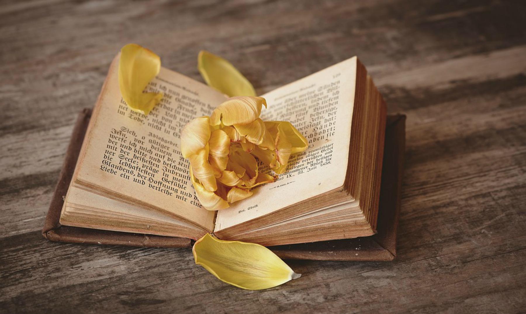 Frases de libros ¡no hay nada mejor que leer un buen libro!