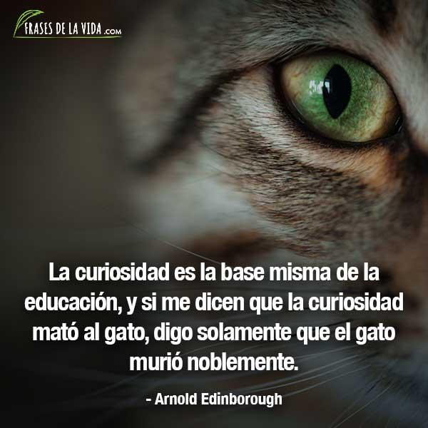 80 Frases Sobre La Curiosidad Muy Interesantes Con Imágenes
