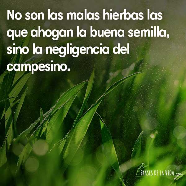 Frases de Confucio, No son las malas hierbas las que ahogan la buena semilla, sino la negligencia del campesino.