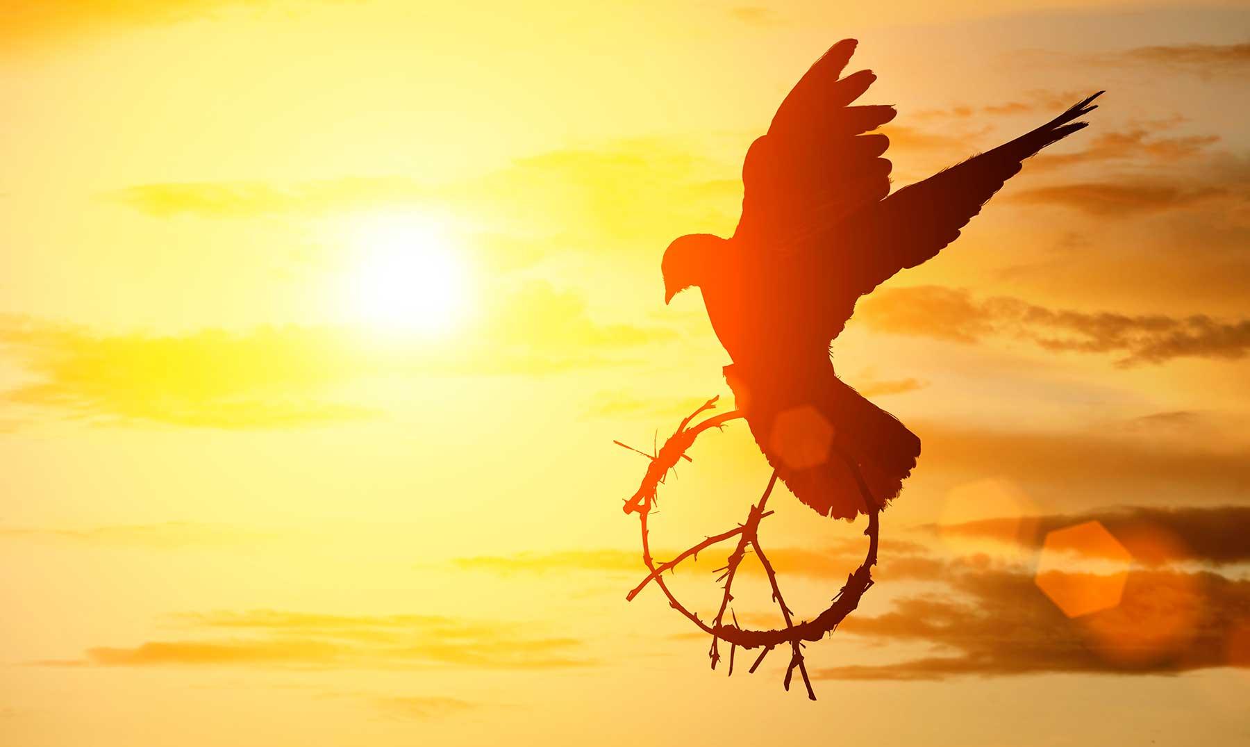 130 Frases De Paz Que Te Transmitirán Tranquilidad Con