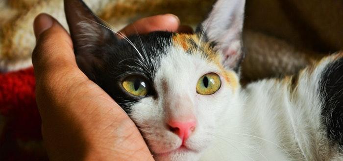 100 Frases Sobre Animales Para Aquellos Que Los Adoran