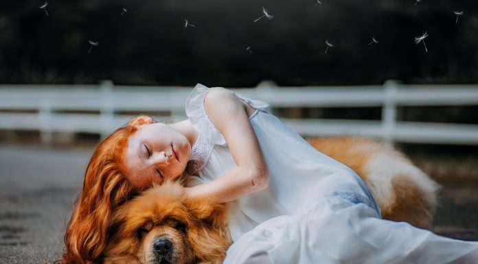 10 Frases sobre animales para aquellos que los adoran