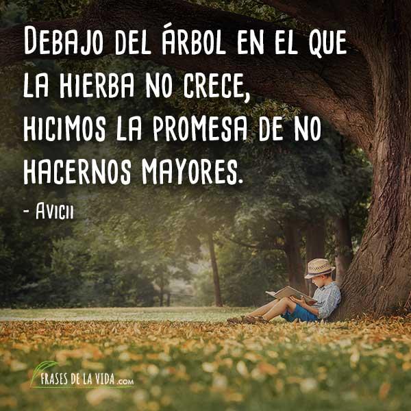 Frases de Avicii, Debajo del árbol en el que la hierba no crece, hicimos la promesa de no hacernos mayores.