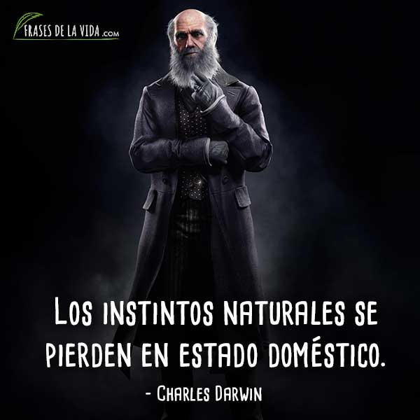 Frases-de-Charles-Darwin-4