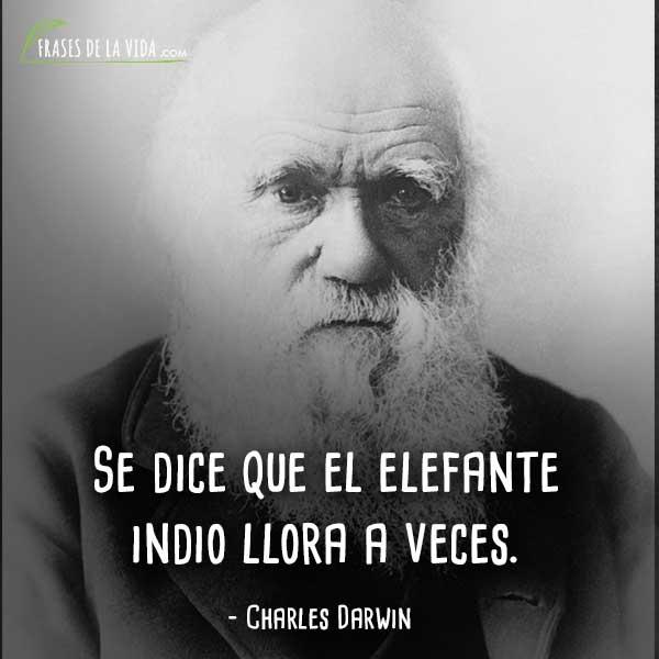 Frases-de-Charles-Darwin-9