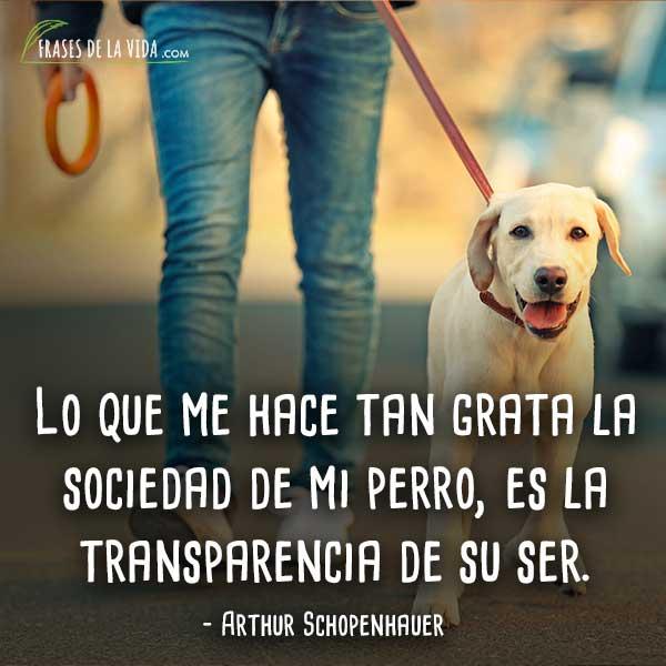 Frases-de-perros-4