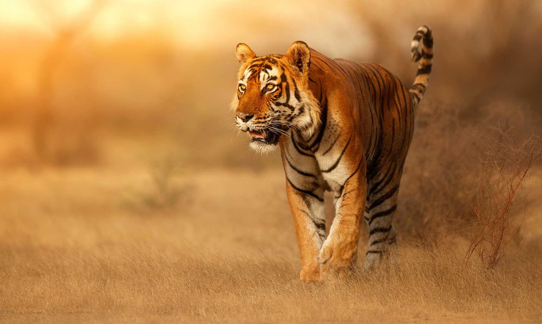 120 Frases De Animales Un Vínculo Con La Naturaleza Con