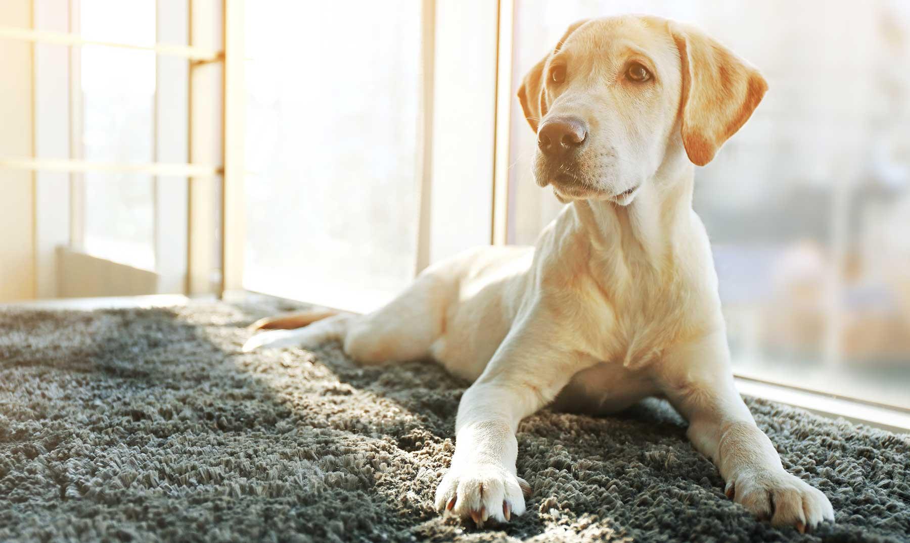 120 Frases De Perros Los Mejores Amigos Del Hombre Con
