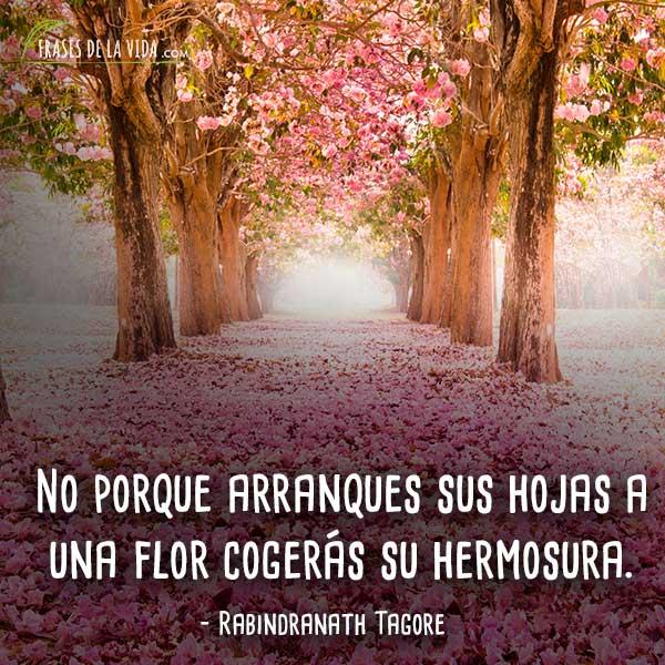 Frases-de-flores-1