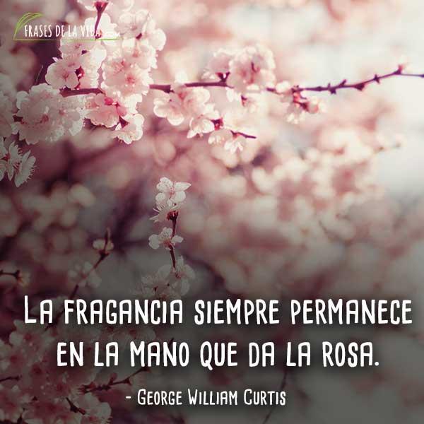 Frases-de-flores-3