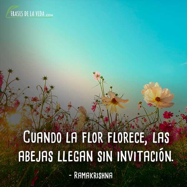 Frases-de-flores-7
