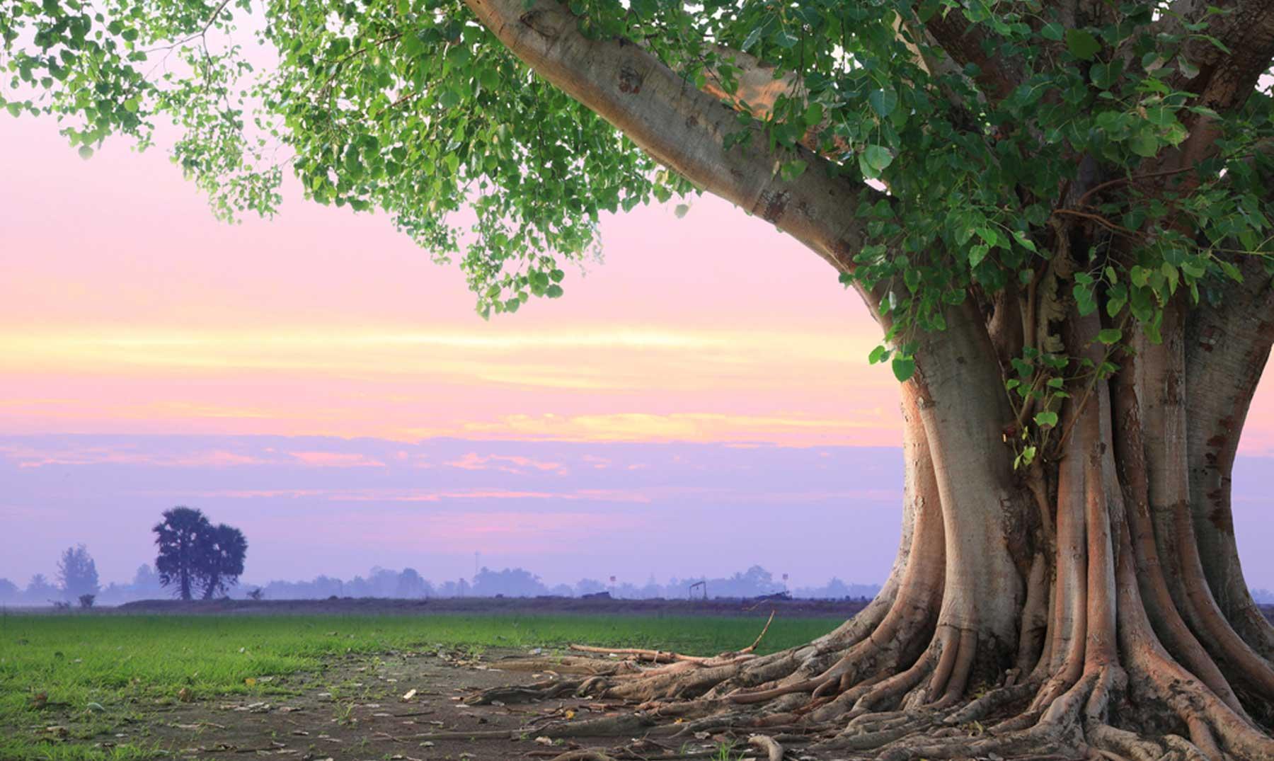 Frases De árboles Frases Sobre árboles Frases De La Vida