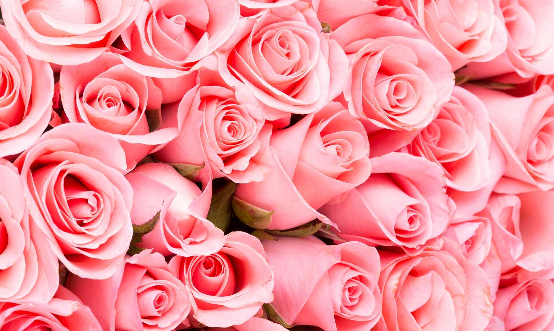 80 Frases De Rosas La Flores Del Amor Y El Respeto Imágenes