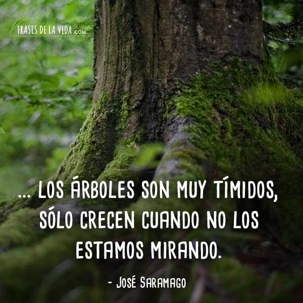 Frases De árboles 5 Frases De La Vida