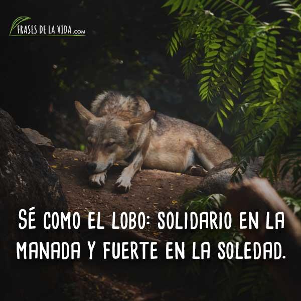 Frases-de-Lobos-2